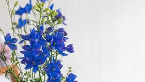 花は色、人はこころ