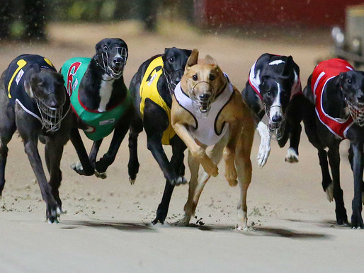Greyhound Racing - What's Up With That? #2