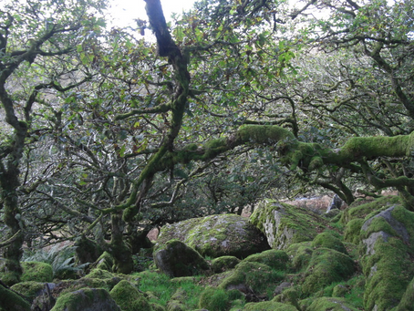 Wistmans' Wood