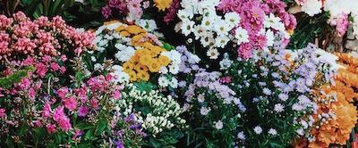¿Cómo hacer que las flores duren más?