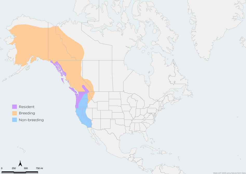 Varied Thrush Range Map