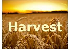 An article about the Harvest Drive in Service which I did for our church.