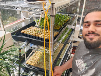 Hydroponics Vs Soil: Why I Think Growing with Hydroponics Is More Versatile