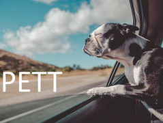 Clients want a PETT relationship