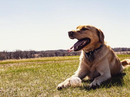 Hey everyone! I am Pete - the farm dog!