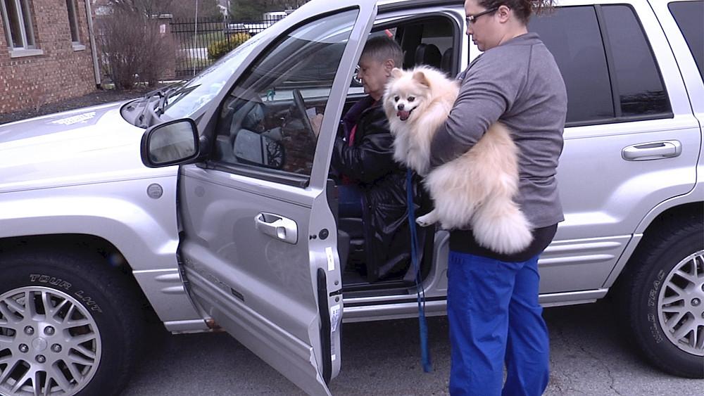 Cream Pomeranian, client in care, veterinary technican