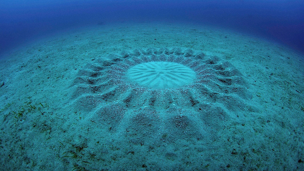 dessins sur le sable des poissons-globe