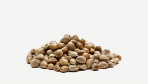 12 Benefits of Hemp Seed Oil for Great Health