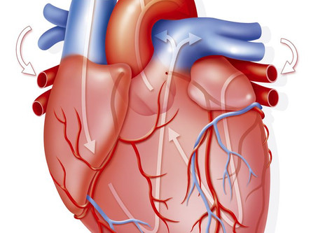 Cinco alimentos para tu corazón