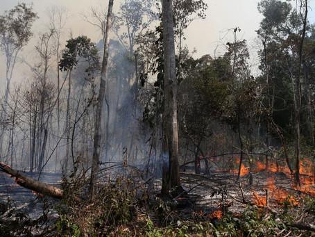 Incêndios intensificados pelo aquecimento global pode destruir 16% da Amazônia