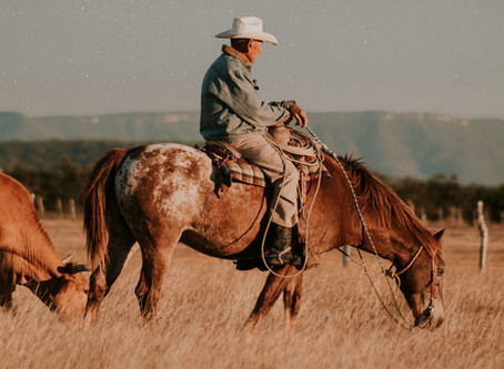 Bélflóra a lovakban: mi ez, mi a feladata, miért fontos?