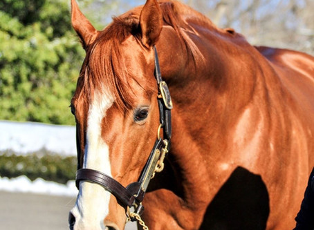 The Story of Justify, America's 13th Triple Crown Winner