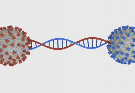 12.706 Mutaciones identificadas en el SARS-CoV-2