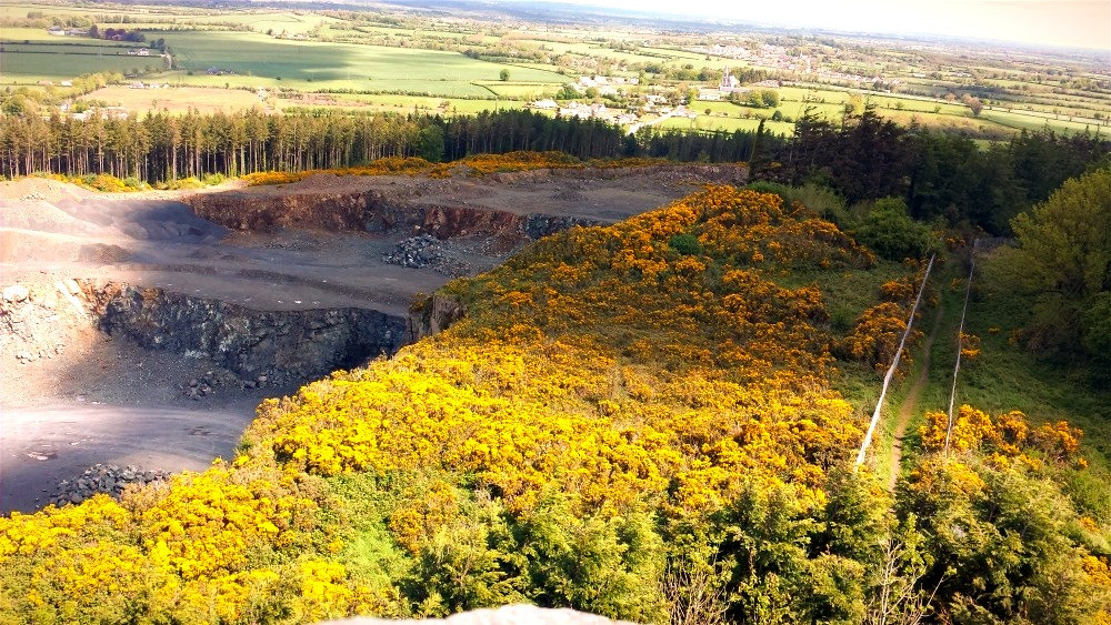 A sea of yellow gorse beside the quarry on the Hill of Allen, legendary home of Fionn mac Cumhall.