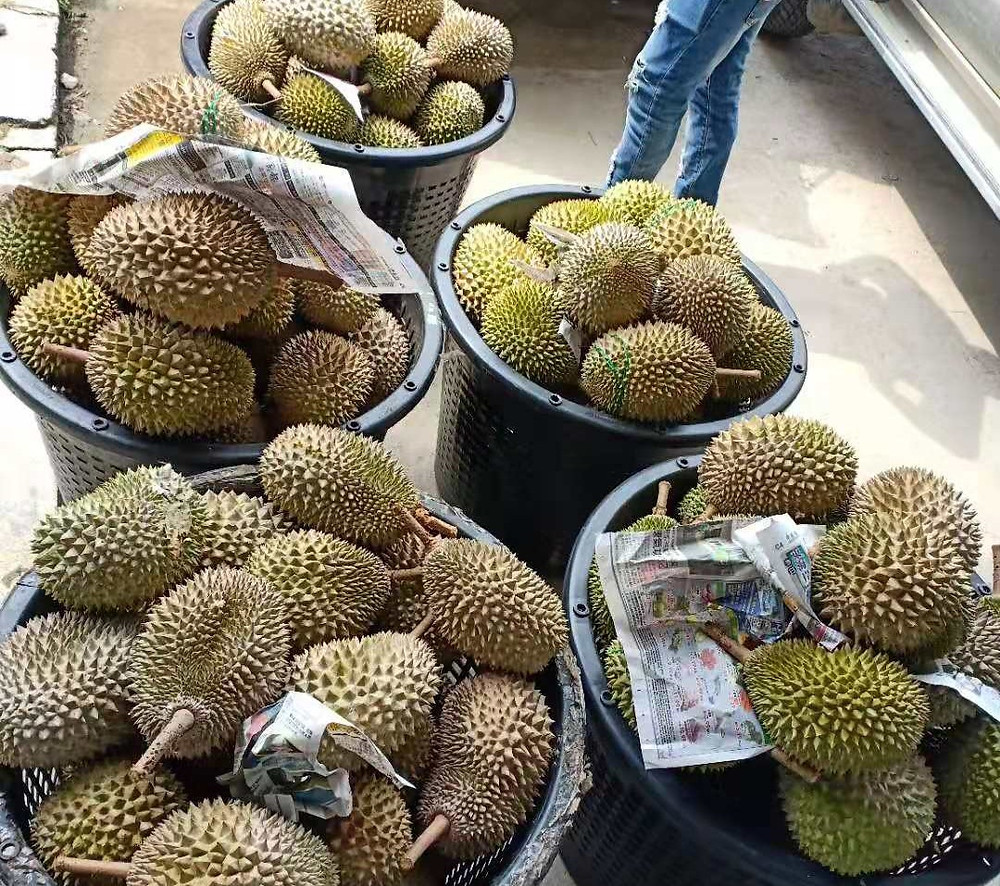 Basket of durian during the season.