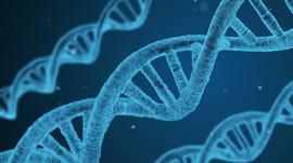 La reparación del ADN nos protege de enfermedades