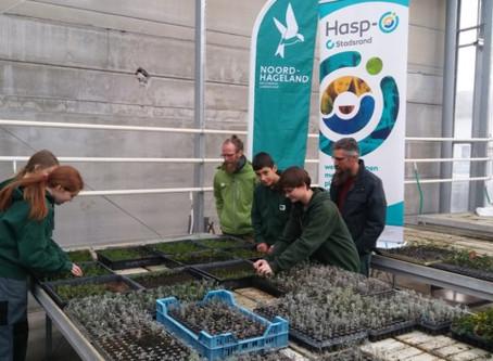 Vakkennis in Hasp-O Stadsrand redt grote tijm van uitsterven