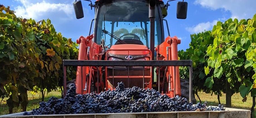 Rural Georgia surprises: Wineries and vineyards