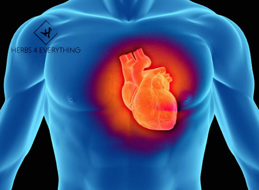 How CoQ10 Helps Your Heart Health