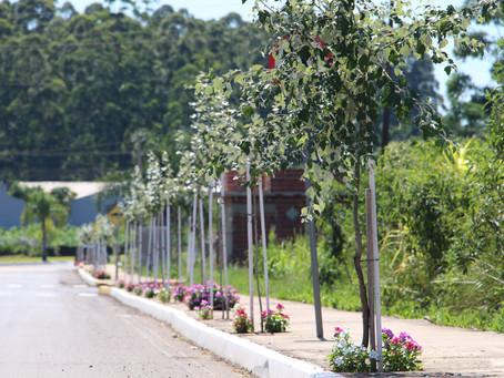 Município desenvolve projeto de arborização urbana