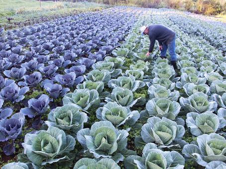 Produtores ampliam o cultivo de alimentos orgânicos