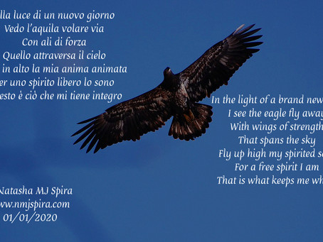 Con ali di forza... With wings of strength...