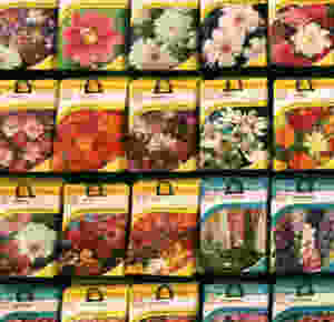 seeds seed packets flowers