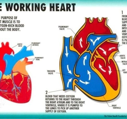 5 Key Aspects of the Heart