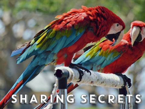 SHARING SECRETS: SDHS Facebook Page & Group Posts!