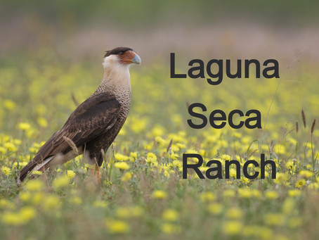 Laguna Seca Ranch
