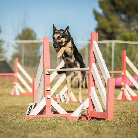 Esporte x Cachorro: bem-estar e diversão
