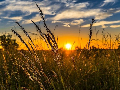 CRISPR-Cas9: The Future of Agriculture