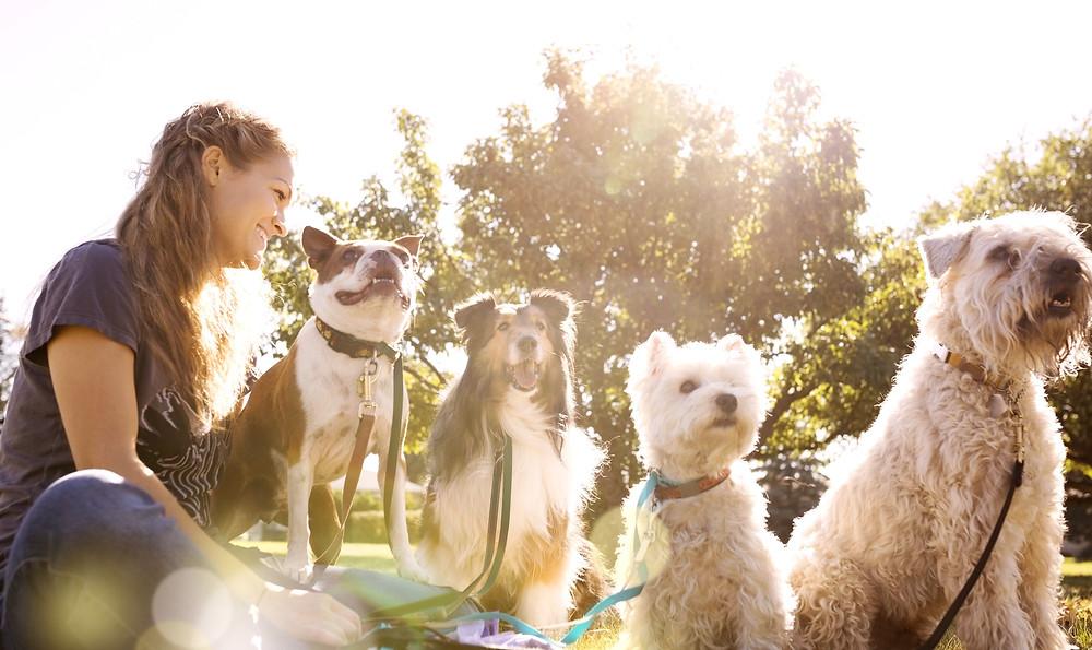 Como aproveitar o crescimento do mercado Pet e ser bem sucedido? - startblog