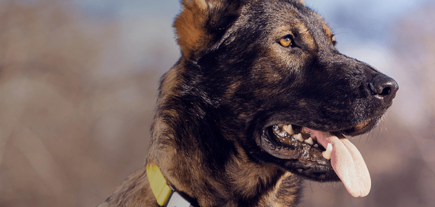 Fi Smart Dog Collar – The Collar That Never Stops Tracking Your Dog