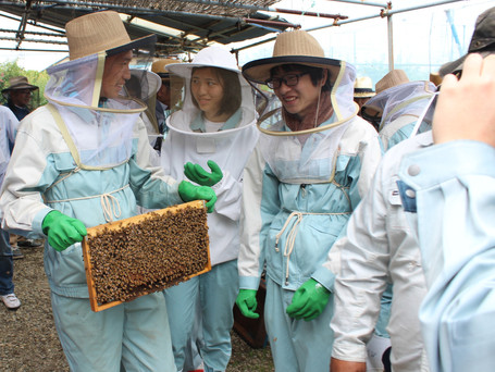 高校生対象に養蜂体験講習会