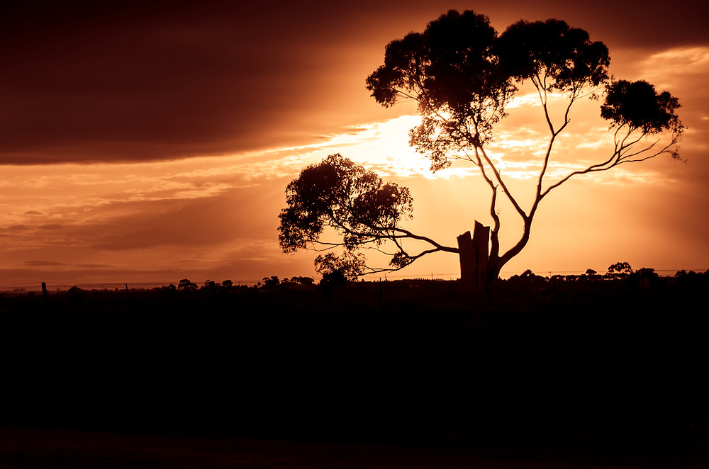 Creative photography by Frank Perez of a lonely, powerful tree at sunset in Melbourne