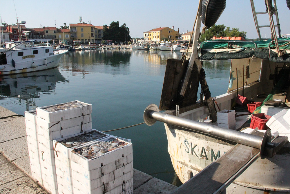 The day's catch - Novigrad (NW Istria)