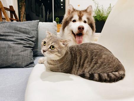 Brexit a podróż z psem i kotem