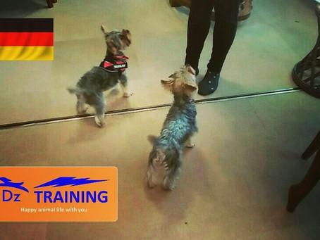 ドイツのトレーニング