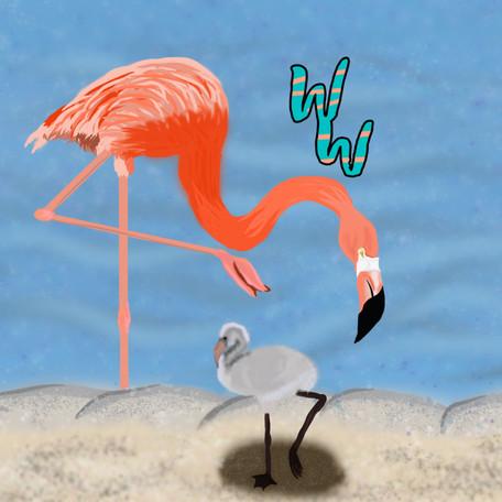 American Flamingos!!