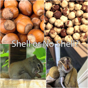 Shell or No Shell nuts and seeds?