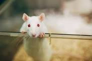 Is Your Child a Human Lab Rat?