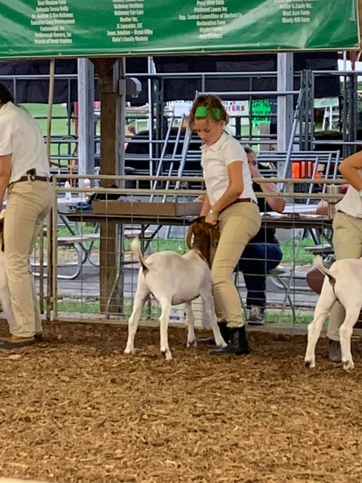 girl showing her goat at the harford county 4-h farm fair