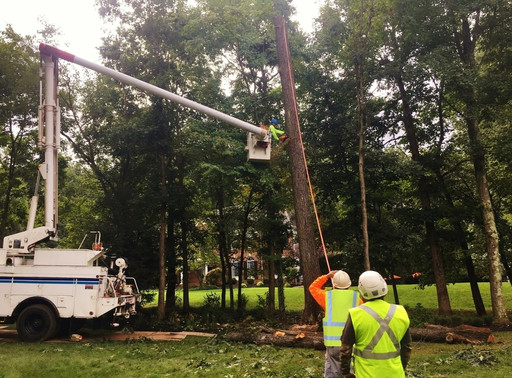 Top 10 Reasons for Tree Removal