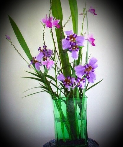 Orchids in my Suva house.