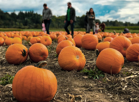 Pumpkins, pony rides and a petting zoo. It's all coming to the Great American Lone Star Ranch.