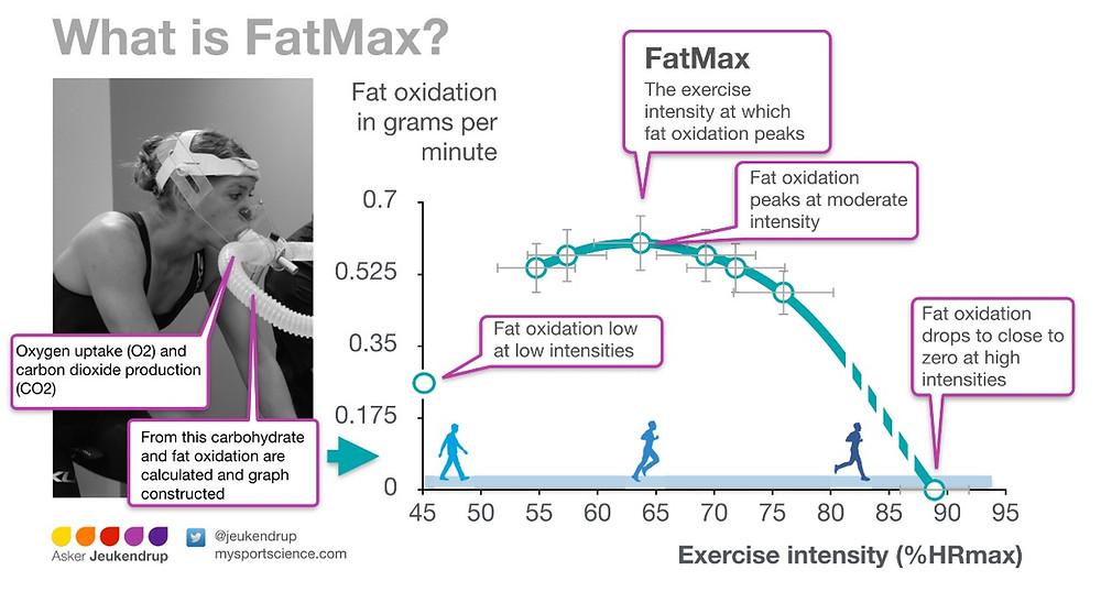 0017 Fatmax.png