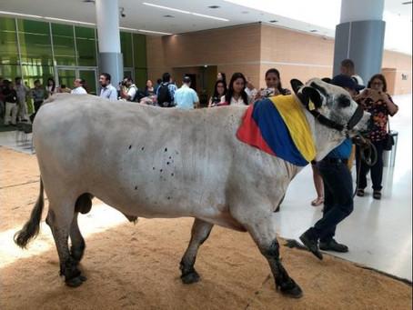 Barranquilla organiza la II Feria Agroexpo Caribe