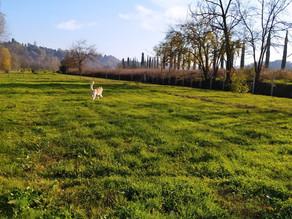#Edublog: vorresti un cane libero e felice? il richiamo del cane come funziona?