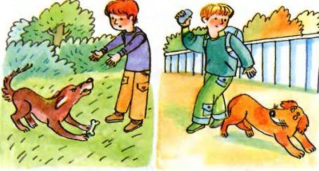 Правила безопасности при общении с животными